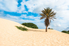 Waves on sand dunes  in Chaves beach Praia de Chaves in Boavist Royalty Free Stock Images
