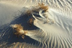 Waves of sand and plants in the desert of Rub` Al Khali. On a sunny day Royalty Free Stock Image