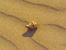 Waves of sand with shell. On the tropical beach Royalty Free Stock Image