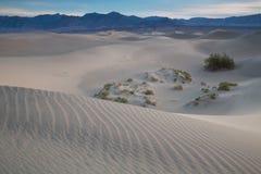 Waves of sand on top of the dunes. Sunrise. Desert in Mesquite F Stock Photo