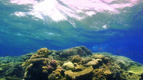 Waves of the sea over the coral reef stock video