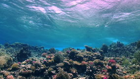 Waves of the sea over the coral reef. View from underwater stock video