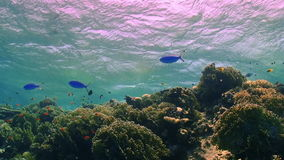 Waves of the sea over the coral reef. View from underwater stock video footage