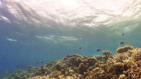 Waves of the sea over the coral reef. View from underwater stock footage