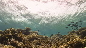 Waves of the sea over the coral reef Stock Photography