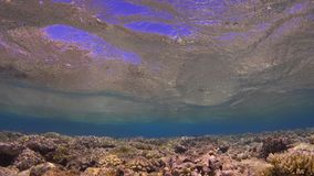 Waves of Sea Over the Coral Reef. View from underwater stock footage