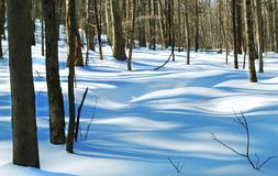 Waves of Snow. Snow in forest appear as waves over uneven surfaces Stock Photos