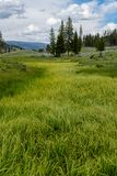 Waves of Summer Grass in Wyoming. Wilderness stock photography