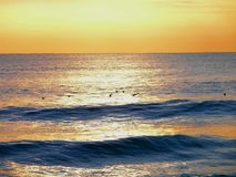 Waves at Sunset. Birds fly across ocean waves during sunset royalty free stock image