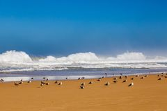 Waves of surf stormy Atlantic near Safi stock photos