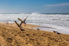 Waves of surf stormy Atlantic near Safi stock image