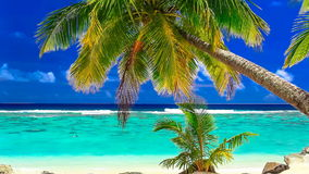 Waves on a tropical beach with palm tree, Cook Islands. Waves on a vibrant tropical beach with palm tree, Cook Islandsn stock video