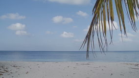 Waves on a tropical beach with palm tree. Dry branch of palm trees swaying in the wind against the background of a deserted tropical beach and blue ocean stock video footage