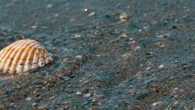 Waves wash over four different shells on beach and washes them away. Waves wash over four different shells on the beach and washes them away stock footage