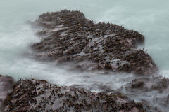 Waves wash over seaweed covered rocks Royalty Free Stock Photo