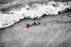 Waves washing away a red rose from the beach. Color against black and white. Love Royalty Free Stock Photos
