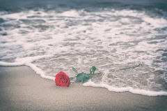 Waves washing away a red rose from the beach. Vintage. Love. Waves washing away a red rose from the beach. Concept of romantic love, romance, but may also Royalty Free Stock Photos