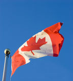 Waving Canadian Flag. The Canadian Flag, waving in the breeze, with a clear blue sky background Royalty Free Stock Images