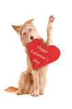Waving dog with red heart isolated Stock Photos