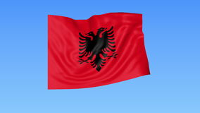 Waving flag of Albania, seamless loop. Exact size, blue background. Part of all countries set. 4K ProRes with alpha. Flapping flag of Albania, blue background vector illustration