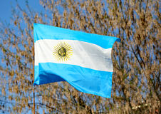 Waving flag of Argentina Royalty Free Stock Photography