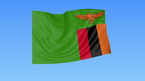 Waving flag of Zambia, seamless loop. Exact size, blue background. Part of all countries set. 4K ProRes with alpha. Flapping flag of Zambia, blue background royalty free illustration