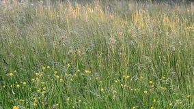 Waving grass stock footage