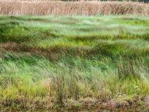 Waving green grass Royalty Free Stock Image
