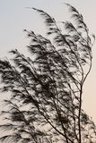 Waving Leaves in Wind - Casuarina Tree - Abstract Design Royalty Free Stock Photos