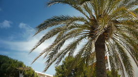 Waving palm tree at Cote D'Azur France stock footage