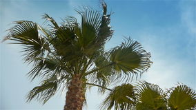 Waving palm trees at Cote D'Azur France stock video