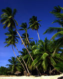 Waving Palms. At the beach of one the the Maldive Islands Royalty Free Stock Photography