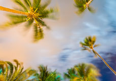 Waving palms at the wind, night light Royalty Free Stock Images