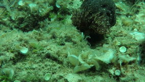 Waving sea anemone stock video footage