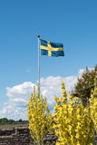 Waving swedish flag. With yellow flowers on the ground Stock Image