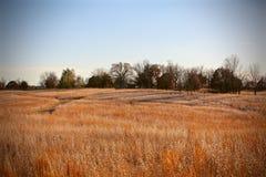 Waving Wheat Stock Photography