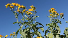 Waving wild flowers in wind stock video