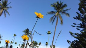 Waving Yellow Buttercup Flowers