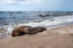 Wavy on the Baltic Sea. Saulkrasti, Latvia Royalty Free Stock Image