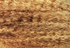 Wavy blont hår Arkivfoton