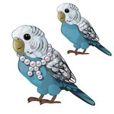 Wavy blue parrot or budgerigar isolated on white background. Tropical domesticated bird with a necklace of pearls. Animated vector cartoon close-up royalty free illustration