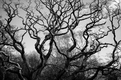 Wavy Branches Stock Image