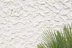 Wavy Cement Stucco Texture with Palm Fronds. This is a perfect picture of wavy rough cement stucco on an exterior wall with green palm fronds in the lower right stock photography