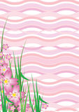 Wavy Cherry Blossom Stock Photos