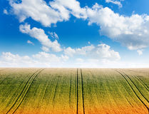 Wavy field with cloudy sky and horizon Stock Photo