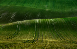 Wavy fields Stock Images