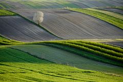 Wavy fields, fairy-tale patterns. The undulating fields create fairy-tale patterns and open spaces. The place is located in Poland in the area of ​​Roztocze Stock Photo