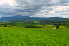 Wavy fields in Tuscany Stock Photography