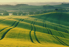 Wavy fields in Tuscany at sunrise Stock Images