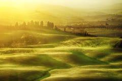 Wavy fields in Tuscany Stock Image